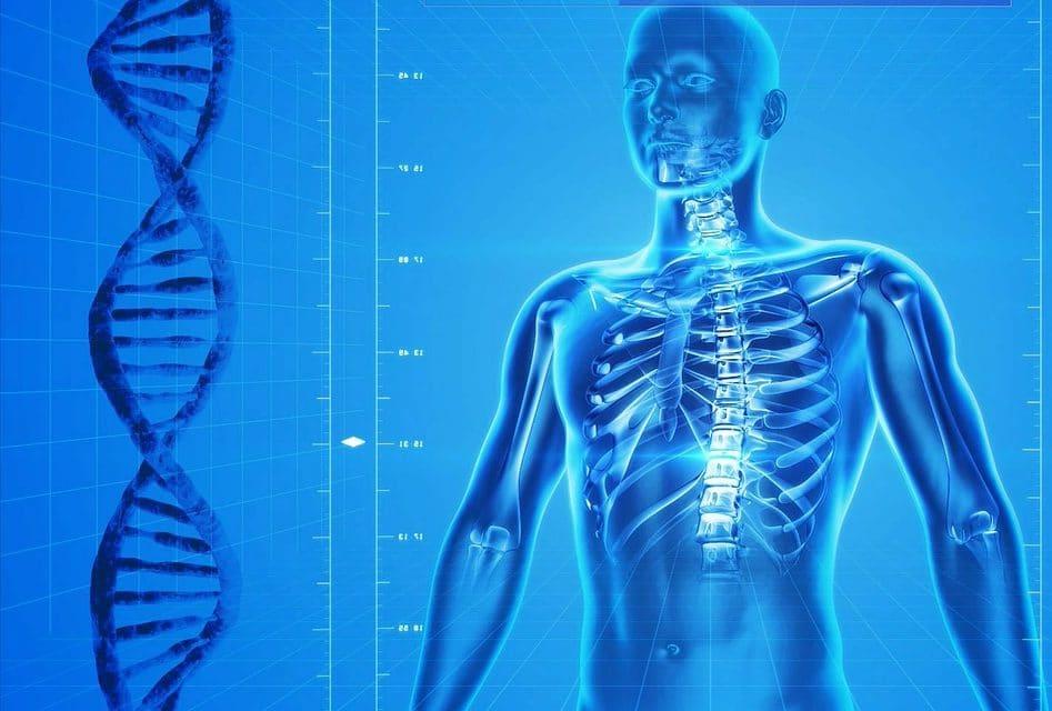 Le calcul de la masse osseuse