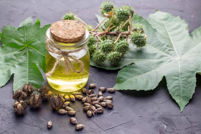 feuilles huile ricin